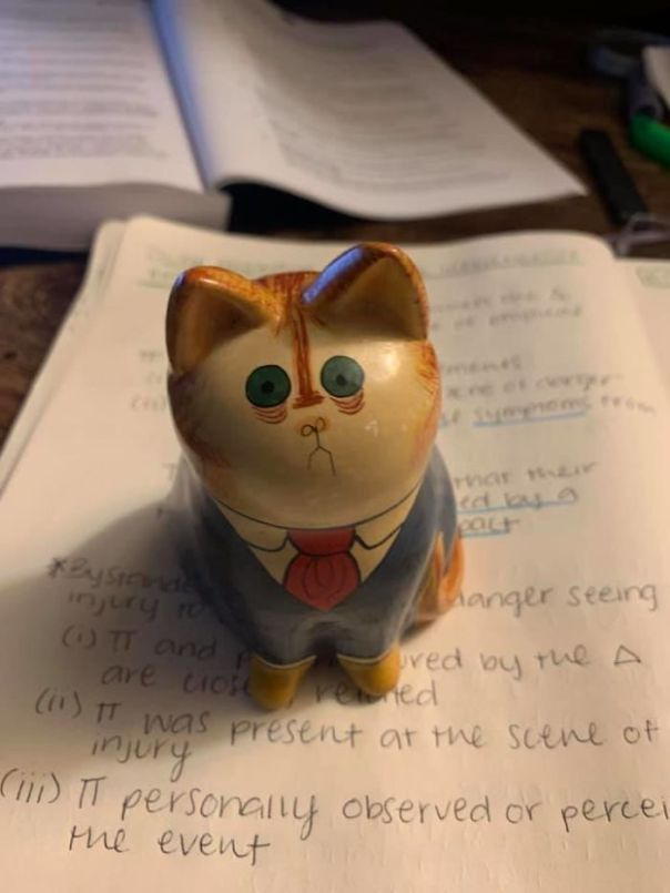 I'm A Recent Law School Grad And I'm Currently Studying For The Bar. I Found This Cat On Ebay And I've Never Related To An Inanimate Object More