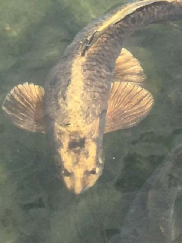 The Markings On This Fish Look Like A Cat