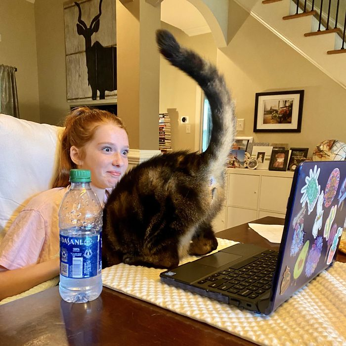 The Cat Loves To Show Herself During The Daughter's Virtual Classes