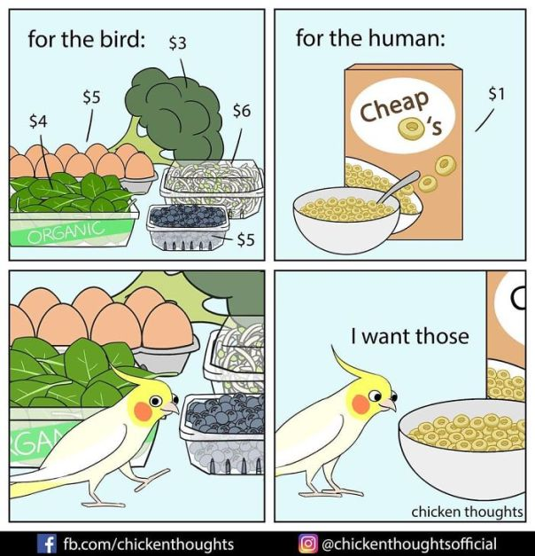 Chicken-Thoughts-Comics