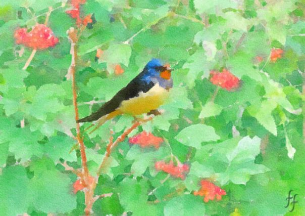 Early Morning Swallow In The Bushes