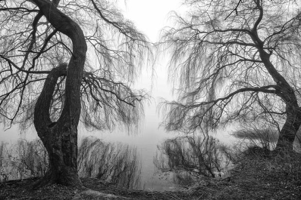 Black And White Commended: Tracey Whitefoot, 'Winter Sketch', Nottinghamshire