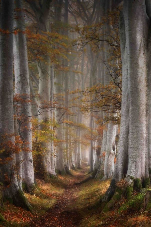 Your View Commended: Michael Johnston, 'Beech Tree Avenue', Aberdeenshire