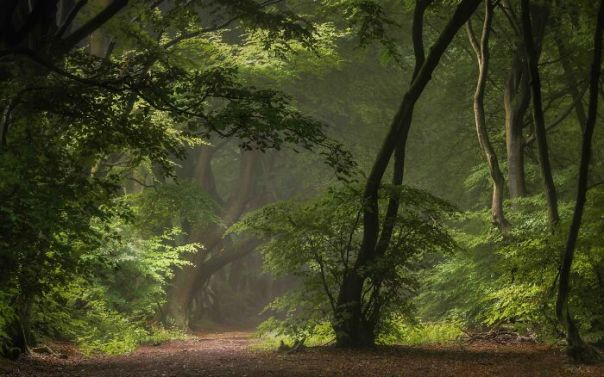 Your View Commended: Will Milner, 'Mirkwood', Buckinghamshire