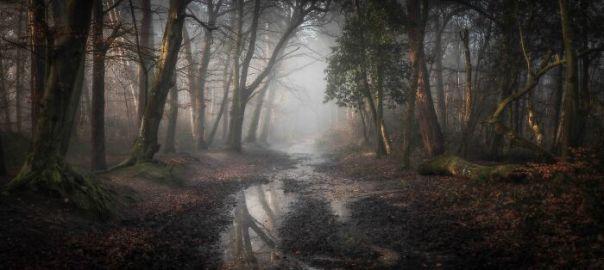 Classic View Winner: Leigh Dorey, ' Roman Road', Dorset