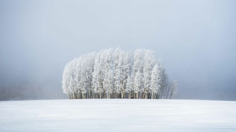 Finalist 'Trees & Fog' By Preston Stoll