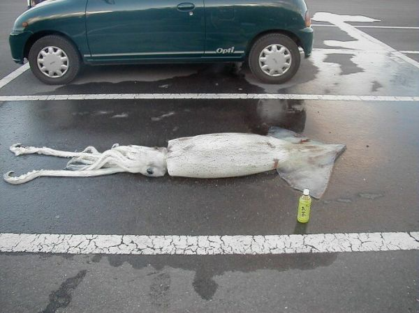 Oh, Let Me Just Park My Squid