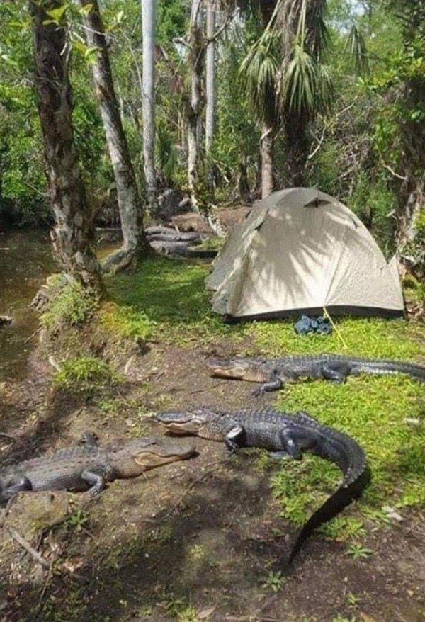 Camping In Florida Looks Fun