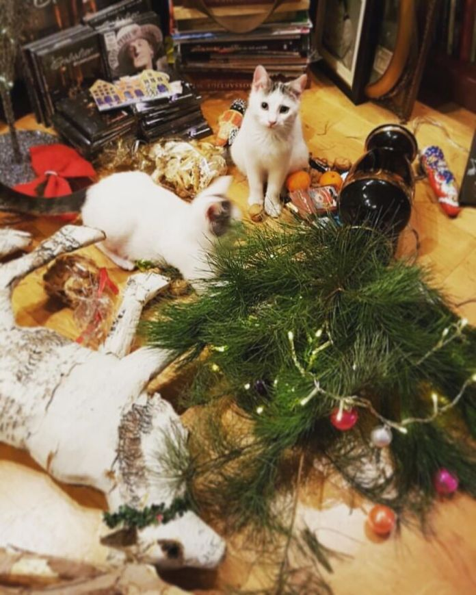 #it Wasn'T Me. My Cats Having Fun By Spoiling Christmas Decorations