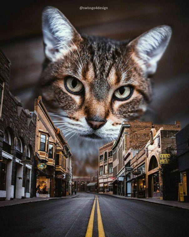 Catzilla Is Back In Town! . . op @unsplash @jusdevoyage .. #arizona #bisbee #catsofinstagram #catloversclub #catstagram #cats_of_instagram #catscatscats #catoftheday #cats_of_instworld #learnphotoshop #graphicroozane #visualart #surrealismworld #surrealart #surrealcollage #thephotoviers #thecreativers #thecreart #launchdsigns #xceptionaledits #theuniversalart #beyondsurreal #psduniverse #discoveredit #dailyart #diggin_art #entersurrealism #entersurrealism #enter_imaginations