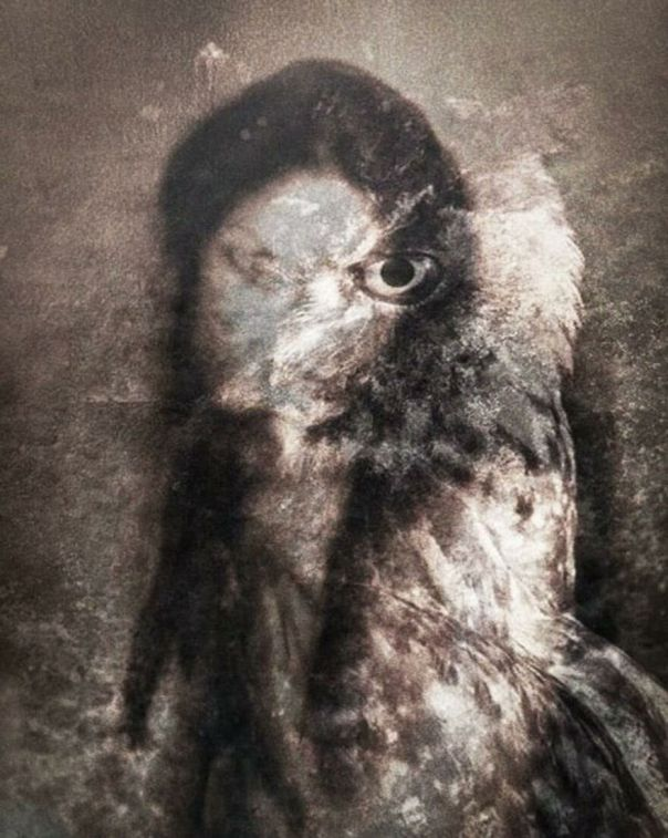 "Nahw Yg ""The Owl"" 2020 Manipulated Photograph"