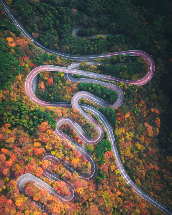 Japan 2nd Place: 'Autumn Snake', By Hiroki Nose