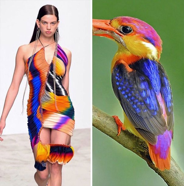 Fashion And Nature