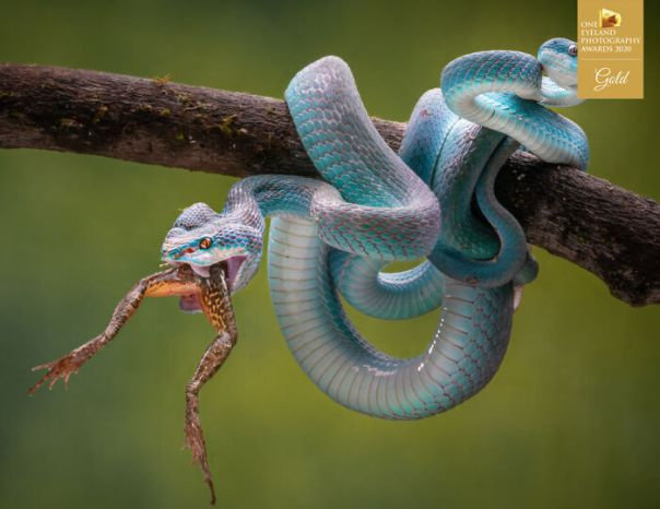Blue Insularis 14 By Chin Leong Teo. Gold In Nature