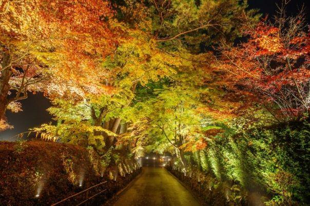 Chuson-Ji Autumn Leaves Galaxy