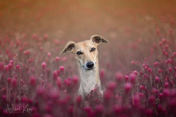 My Flower Power Dog Photos (10 Pics)