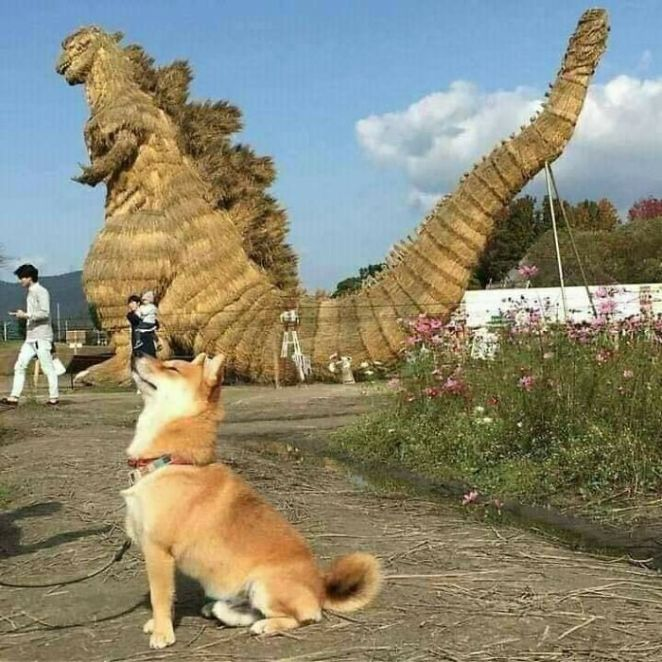 This Facebook Page Is All About Animal Images That Need To Be Seen (100 New Pics)