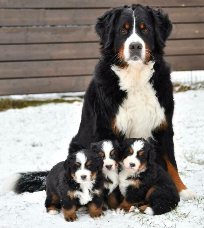 Perfect Family Picture