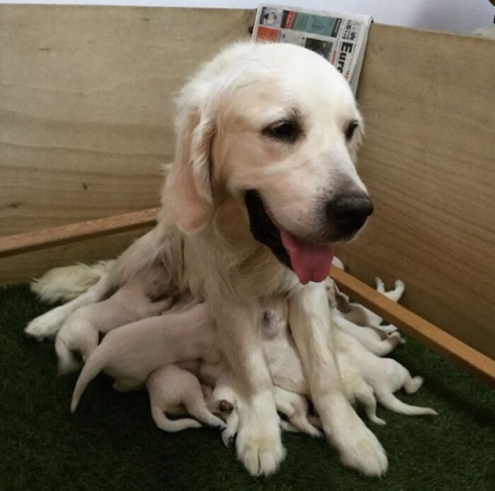 May I Present To You, The Beautiful And Rare Dogtopus
