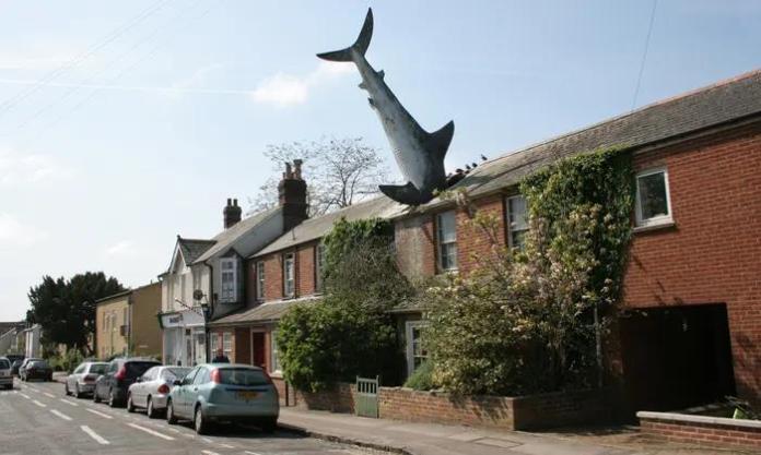 """Sharkitecture"""