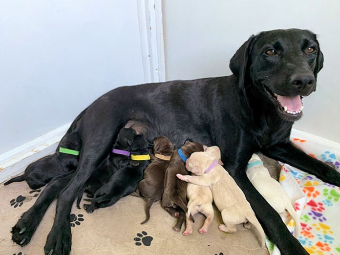 My Foster Mama Ellie Had Her Babies Yesterday - Apparently, She Came With A Whole Lab Sampler Pack