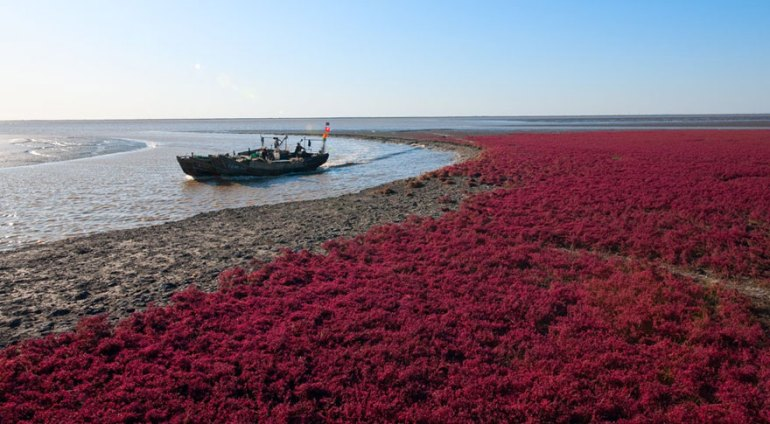 Image result for Panjin Red Beach – China