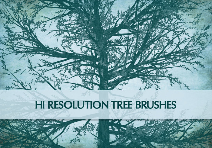 Tree Brushes Free Photoshop Brushes At Brusheezy