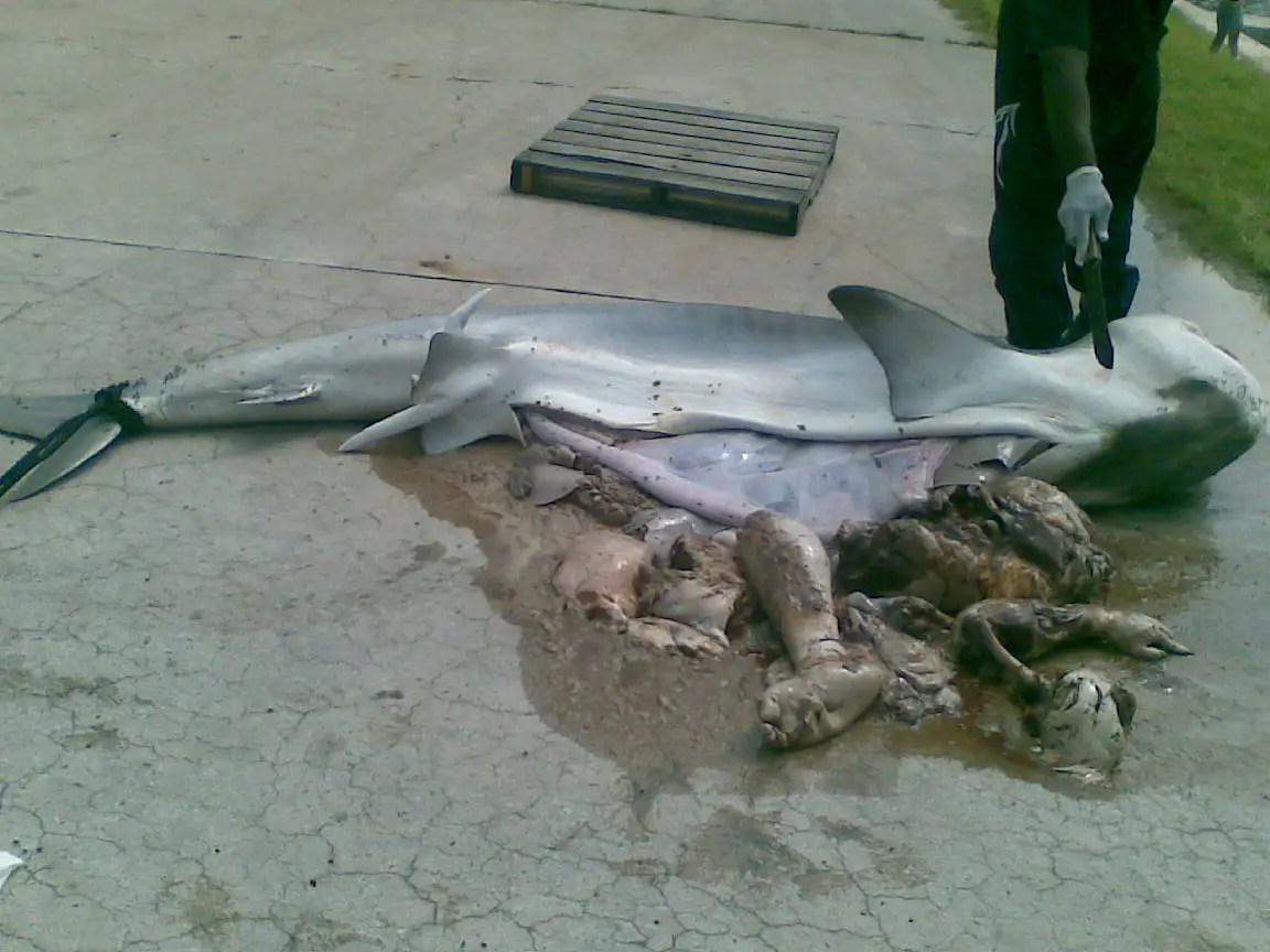 Photos Of The Sailor That An I Banker Found Inside A Shark