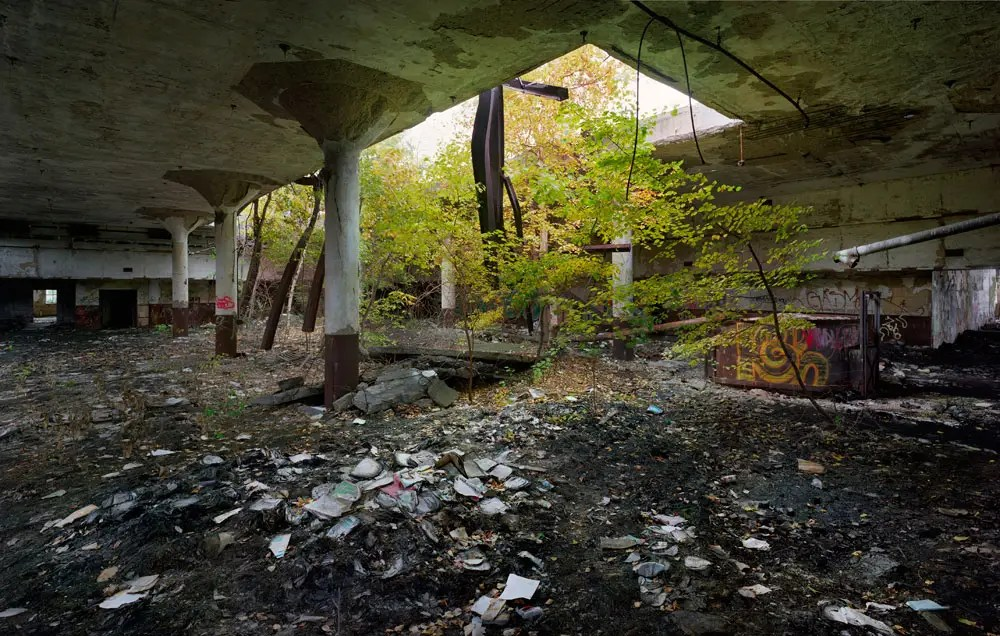 Birches growing in decayed books, Detroit Public Schools Book Depository, 2009