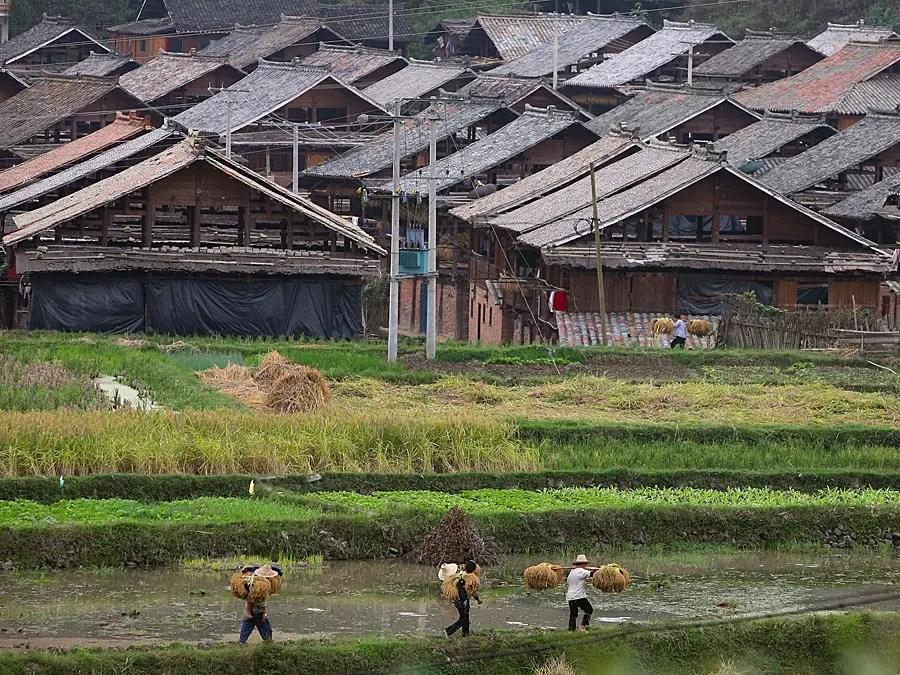 Реформаторы вернулся сельскому хозяйству в семье ориентированная структура управления в пост-эпохи Мао.