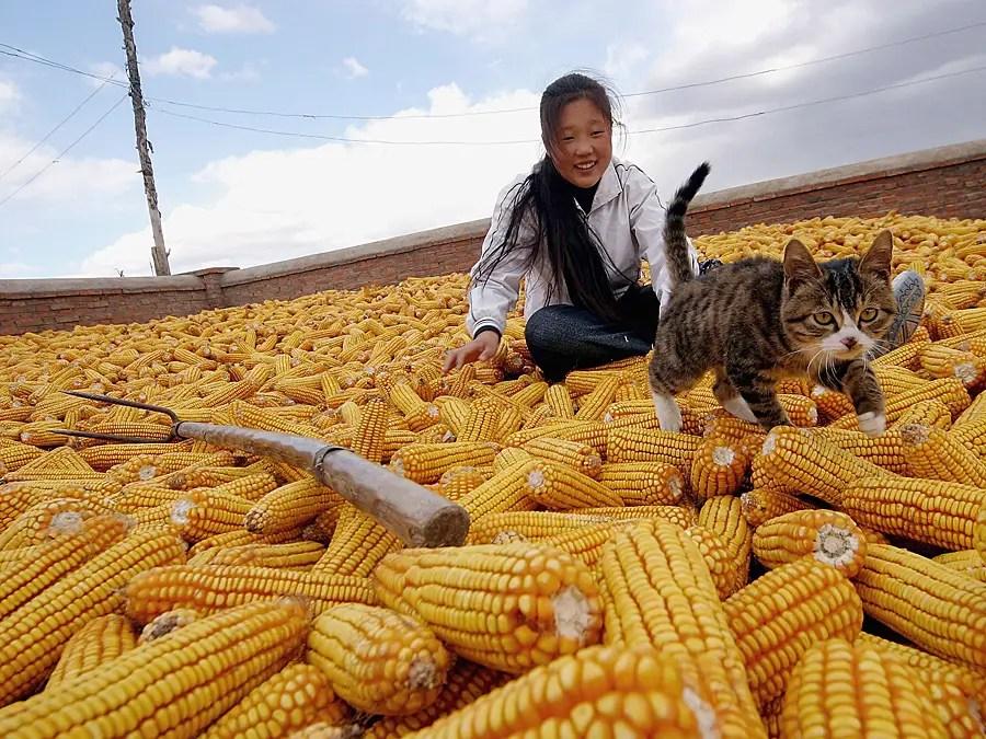 В самом деле, южнокорейские фермеры имеют меньше воды и земли, но в 40 раз более производительным, чем китайские фермеры.