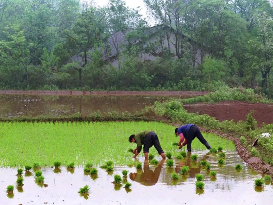 В 2006 году Китай отменил свой сельскохозяйственный налог, чтобы облегчить финансовую нагрузку на фермеров.
