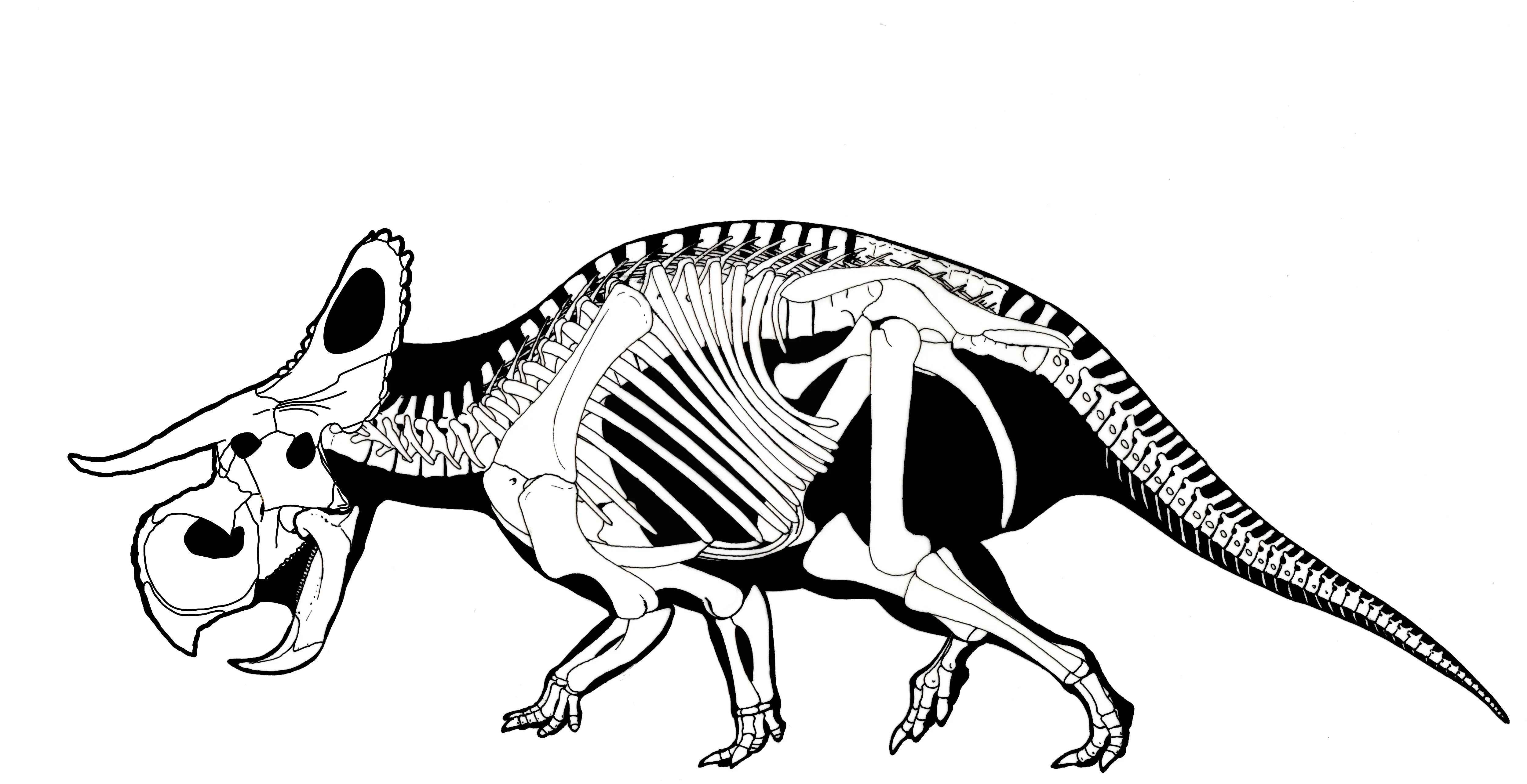 A New Dinosaur Has Been Discovered