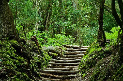 El bosque encantado de Garajonay, en La Gomera.