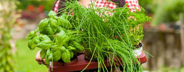 Kräuter pflanzen im Frühling