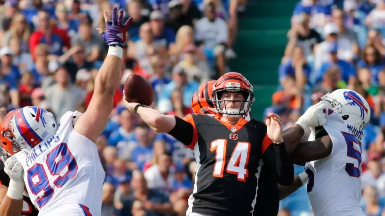 Image result for bengals