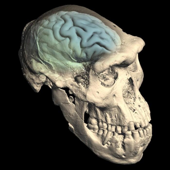 来自达马尼斯-乔治亚州的早期人类头骨777x777.jpg