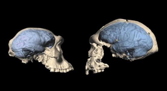 非洲最早的智人人口具有原始的类猿脑,仅是现代人脑的一半-科学探索-cnBeta.COM