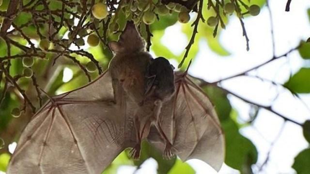 bat-tree-1280x720.jpg