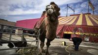 Avignon: a schoolboy attacked by a camel / arh