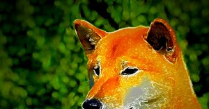 DOGE Army retreats, tail between legs, while Dogeday ends with a 29% drop