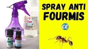 Comment Éloigner les Fourmis Avec un Spray aux Huiles Essentielles.