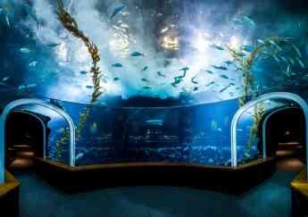 Poema del Mar se incorpora a la Asociación Ibérica de Zoos y Acuarios