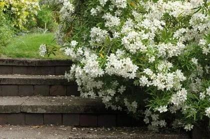 plantes d exterieur sans arrosage 15