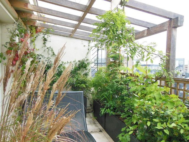 balcon plein sud plantes et
