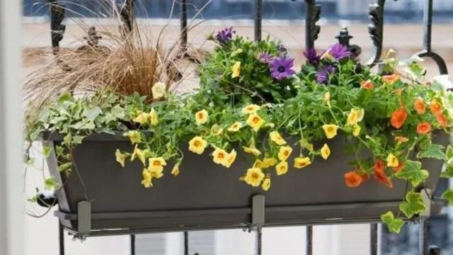 fleurs sur son balcon