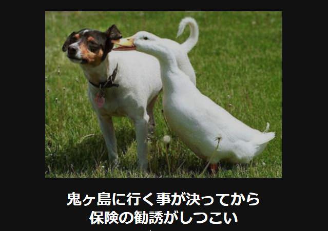 大喜利 犬5