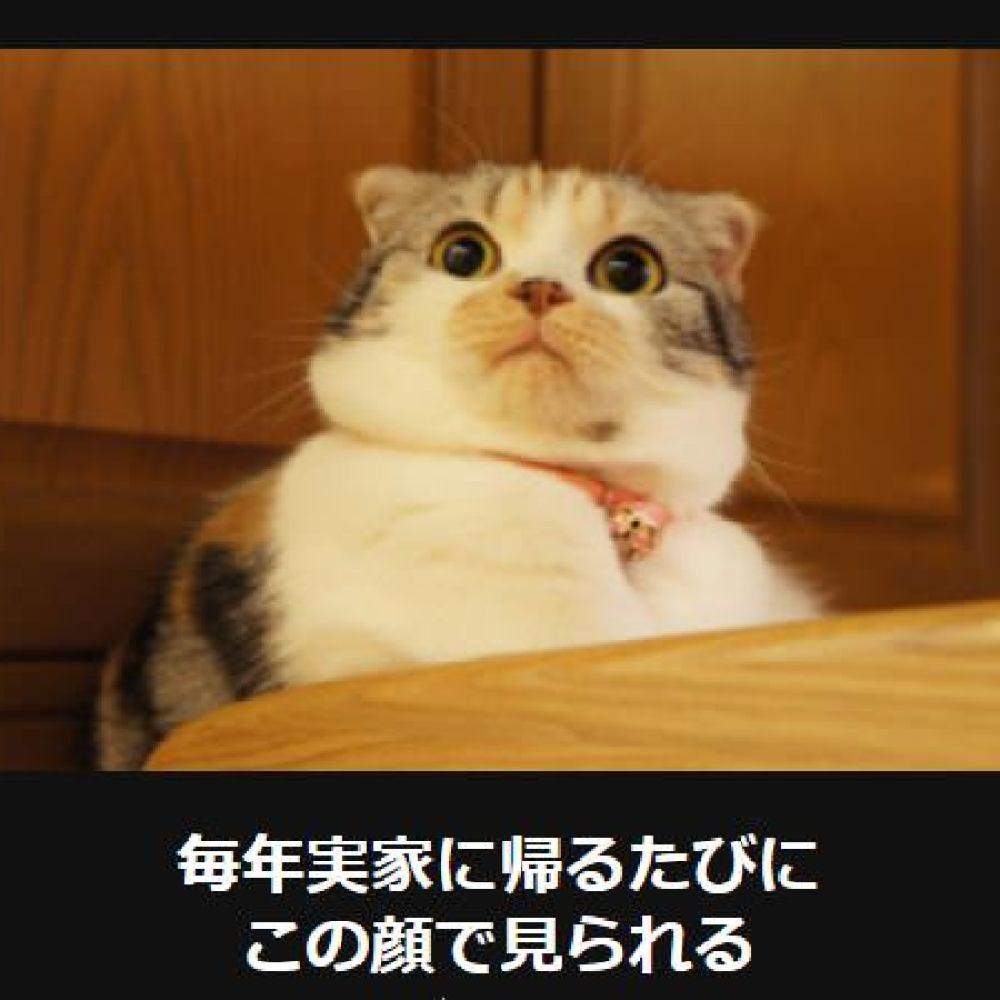 大喜利 猫1