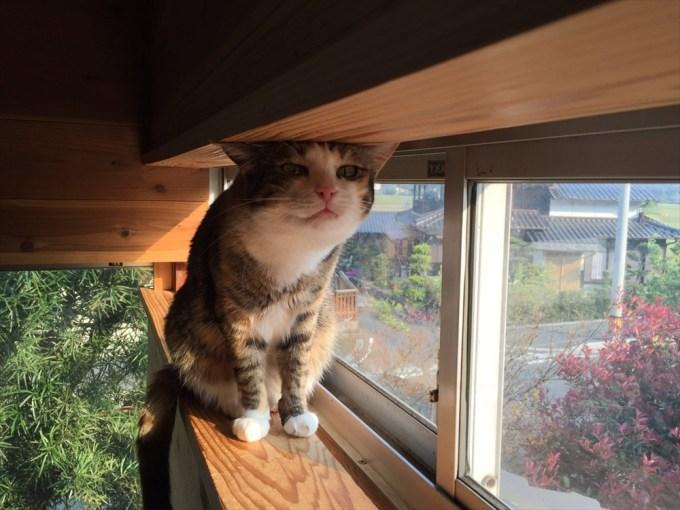 猫の写真ヘタクソ選手権優勝