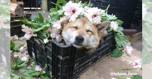 犬の上司に癒される